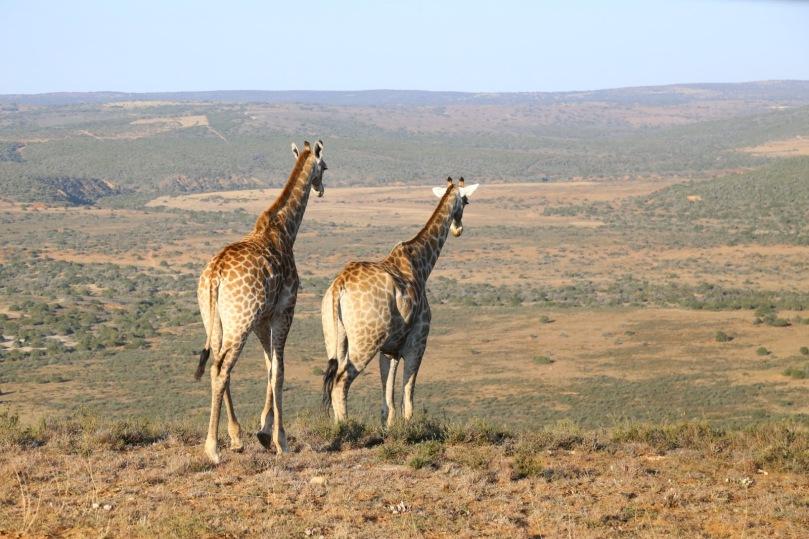 AFRICAN WILDLIFE 14