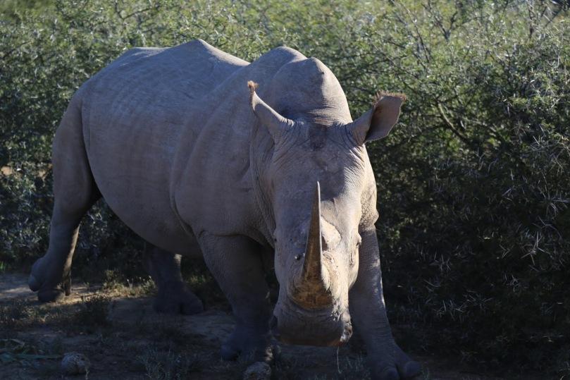 AFRICAN WILDLIFE 15