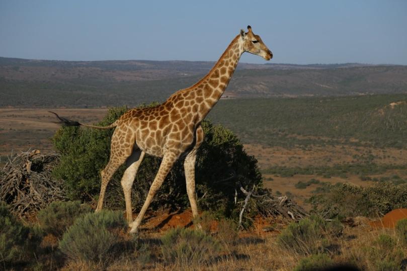 AFRICAN WILDLIFE 17