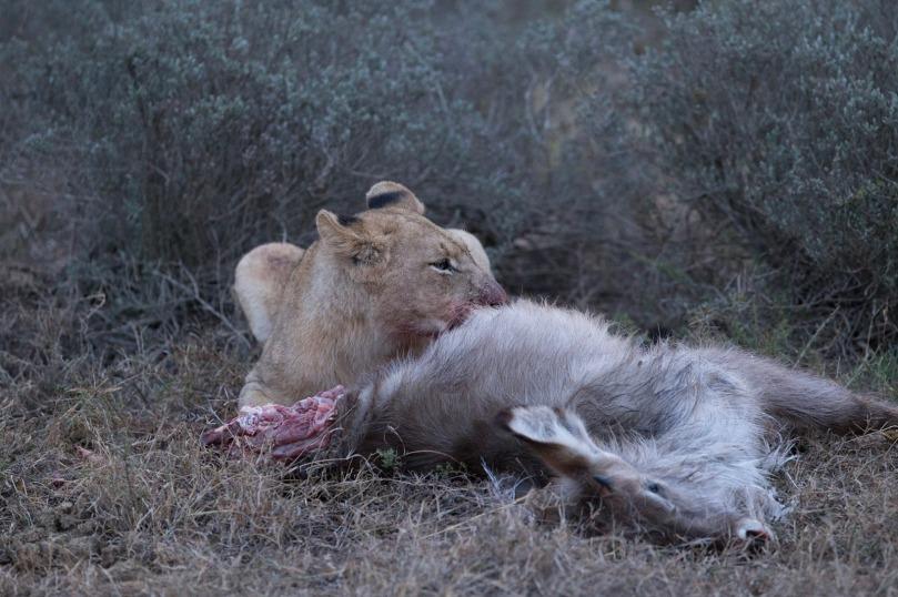 AFRICAN WILDLIFE 29