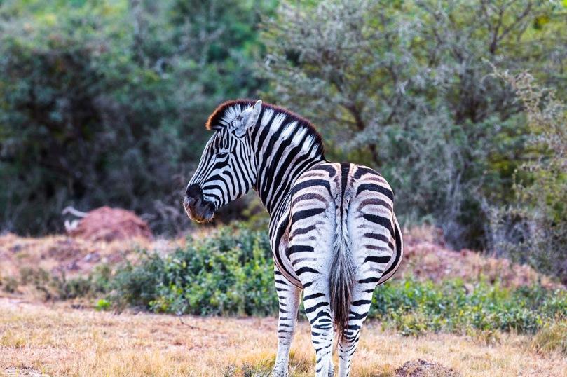 AFRICAN WILDLIFE 413
