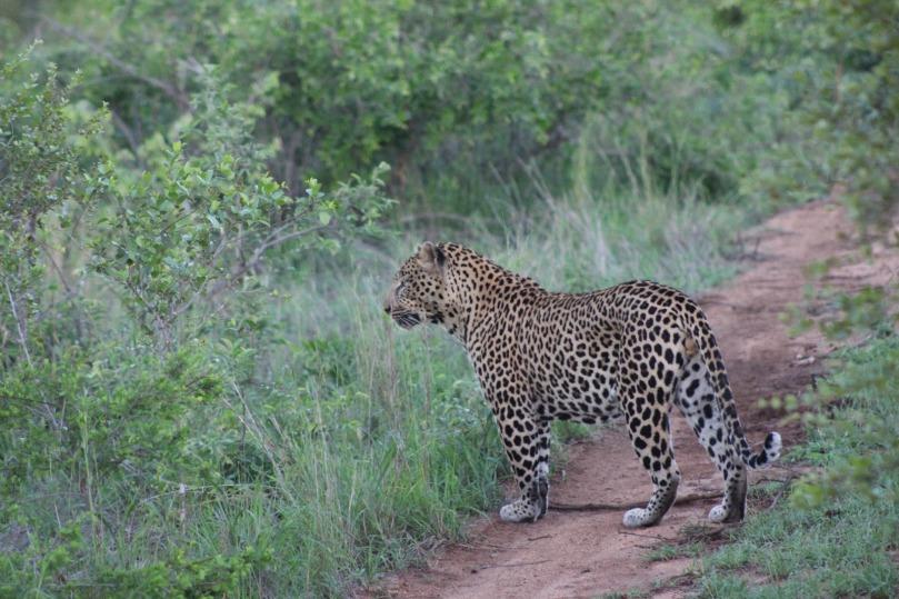 AFRICAN WILDLIFE 6